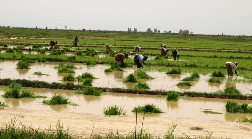 Contre la tyrannie du riz: revisiter nos habitudes alimentaires