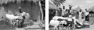 Région de Bakel - Village de Sinthiou Fissa - Marie Diallo