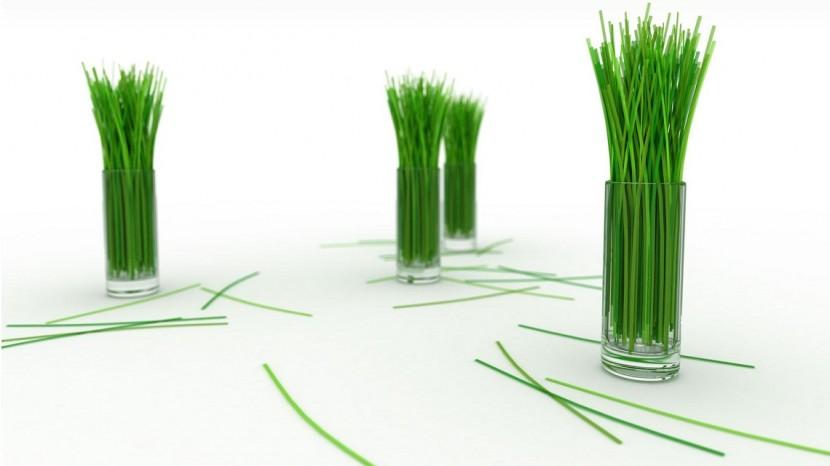 La ciboulette : condiment et plante ornementale