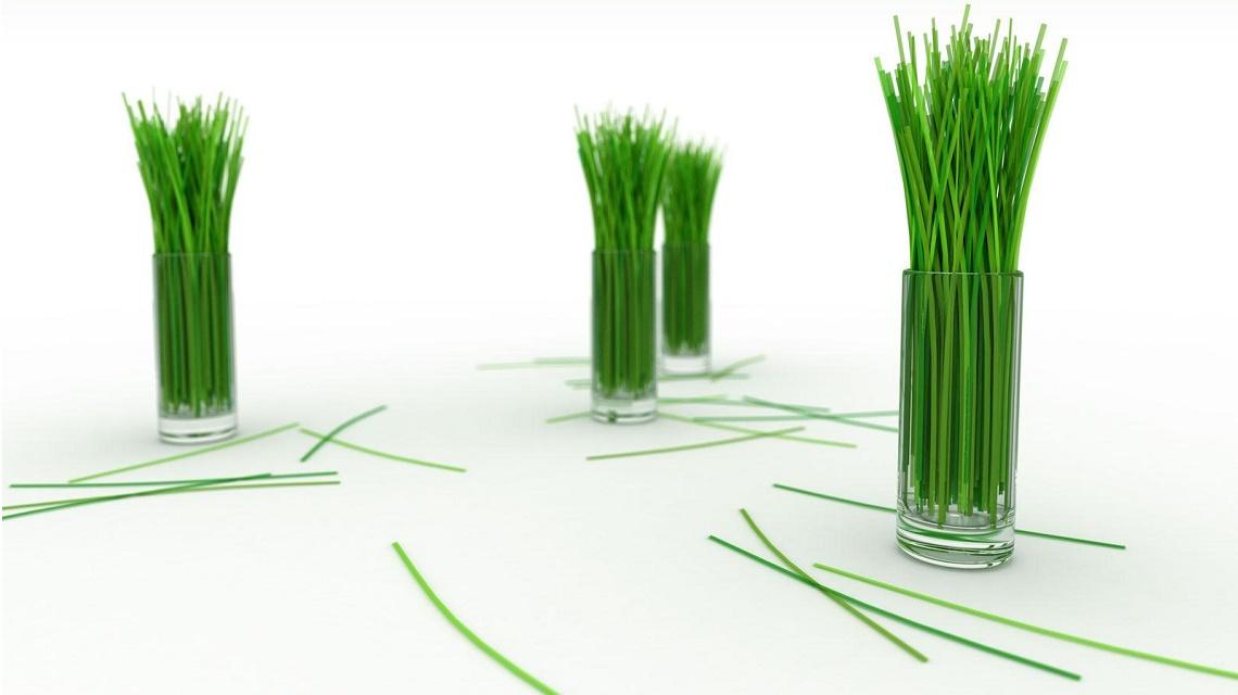 La ciboulette condiment et plante ornementale debbosenegal for Plante ornementale