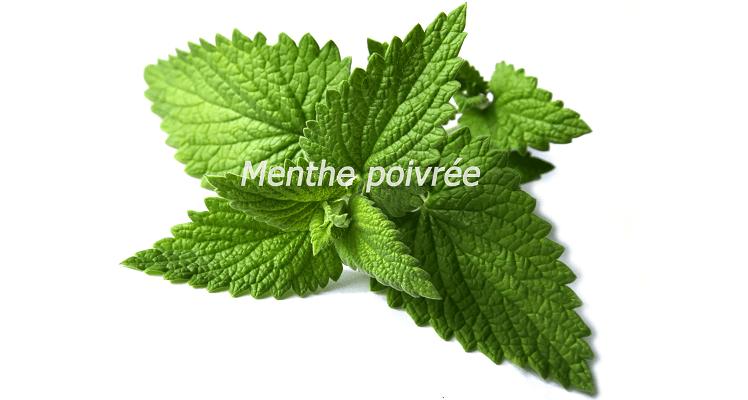 Le nana menthe dans votre potager debbosenegal - Cultiver de la menthe ...